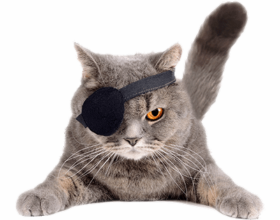 Cat with eye patch on one eye